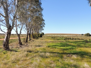 Lot 6 & 7 Koraleigh Road Tooleybuc , NSW, 2736